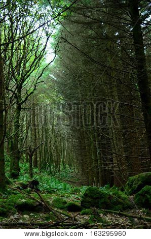 Lush green forest on the Isle of Skye in Scotland.