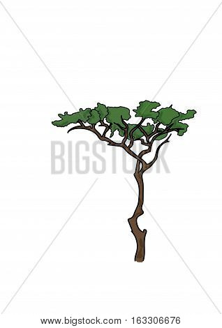 Tall tree with a thin brown long barrel and  broad flat upper branches with green leaves on a white background.