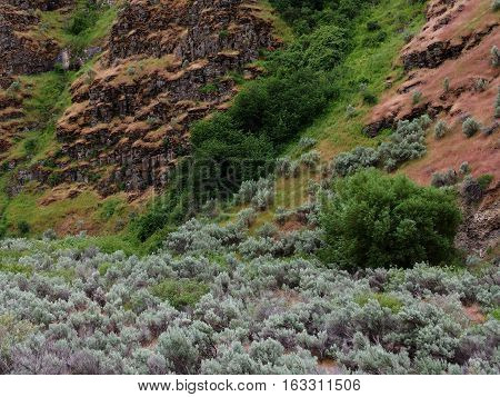 The rugged rocky and steep sloped side of a hill in Northern Oregon with bright green bushes and fresh sagebrush on a spring day.