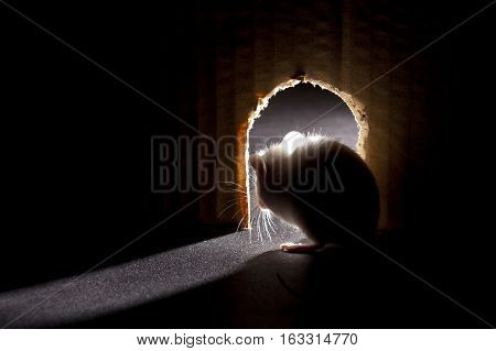 Mouse looking out of hole interior point of view