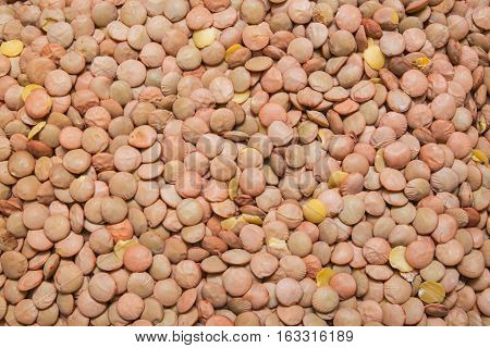 green uncooked lentil background, backdrop or  texture