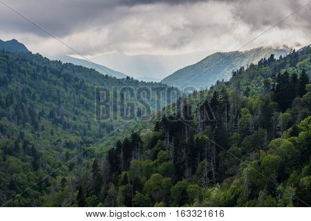 Mountain Slopes Turn Green In Spring In The Smokies