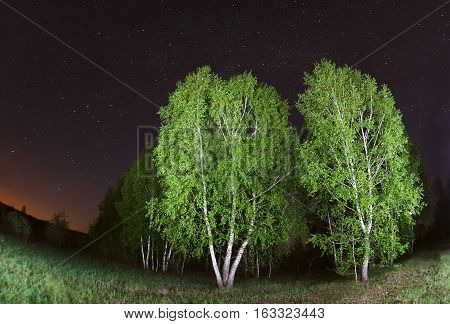 starry sky night photography astrophotography silhouettes trees and birch lit flashlight