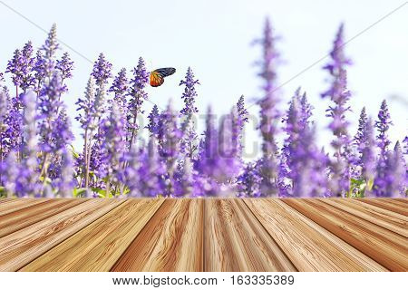 Perspective wooden empty table top with blurred backgrounf of blue salvia flowers and butterfly at the daytime on summer day. Can be used for montage or display your products.
