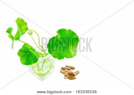 Green Asiatic Pennywort (Centella asiatica ) with long stalk in glass bottles and yellow pill capsules on white background.