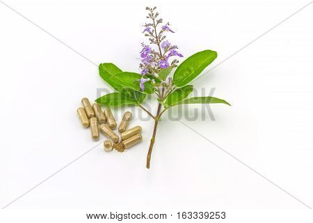 Close up fresh flower Vitex trifolia Linn or Indian Privet with green leaf is herb in Thailand and drug pill on white background