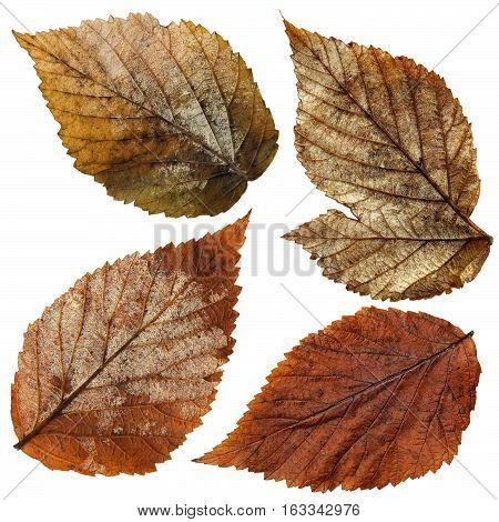 Isolated Wet Raspberry Leaves Set