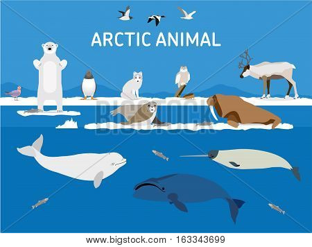 Animals Of The Arctic. Flat Style Illustration