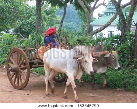 Cart pulled by buffaloes and driven by a population ethnic in a village of Burma