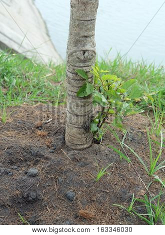 Soil and trunk of trees, trees, ground, reforestation