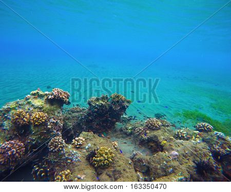 Underwater landscape with deep blue water and colorful corals. Coral reef in tropical sea. Animals and plants in the ocean. Oceanic ecosystem. Seaside aquatory. Snorkeling photo. Undersea life.