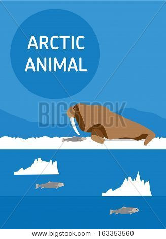 Walrus lying on the snow. Vector drawing of a series of Arctic animals. Flat style illustration