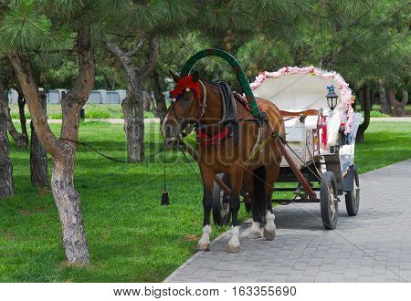 Beautiful pair - horse and cart waiting for the tourists.