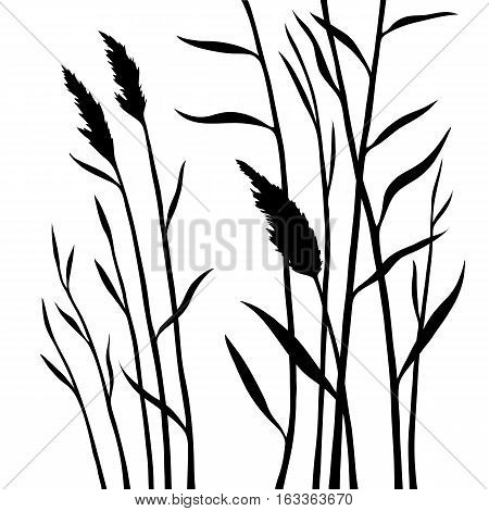 Silhouette of the reed isolated on white background. All branches are divided. Layers. Stock vector illustration.