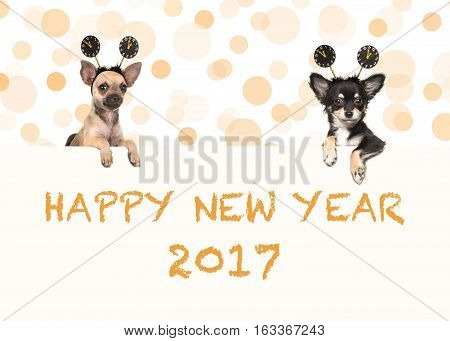 Two chihuahua dogs with happy new year 2017 wishes both wearing new year's decoration