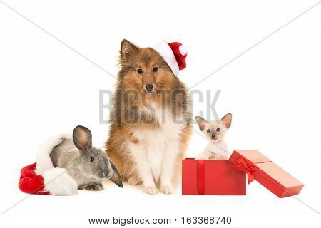 Group of three pets one dogs cat and a rabbit with christmas hats on a white background