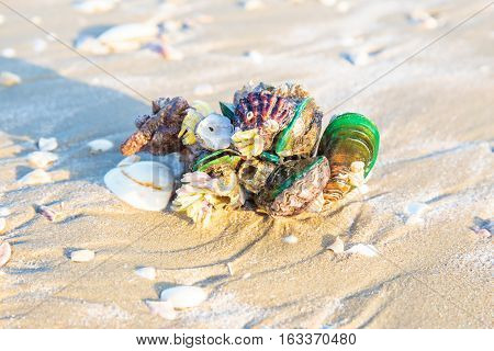 A big or giant Shells or Conch on sand beach in the morning.