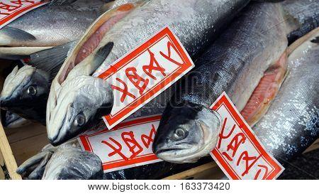 Fresh Whole Salmon Sale In Japanese Fish Market