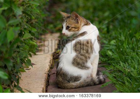 Lovely Cat turn back in the garden