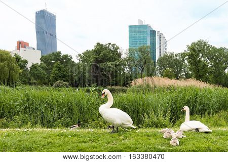 View on vienna international center, un city and office buildings seen from danube park with goose family, austria