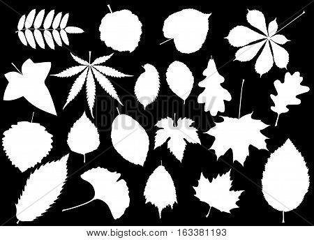 tree leaves set , silhouettes leaf ,