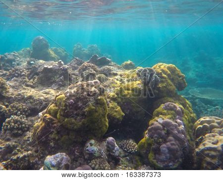 Sea view under surface with coral reef and sun rays. Clean blue water of tropical seashore. Seaside sport activity - snorkeling. Ocean life and ecosystem. Underwater landscape with animals and plants