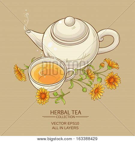 cup of calendula tea and teapot vector background