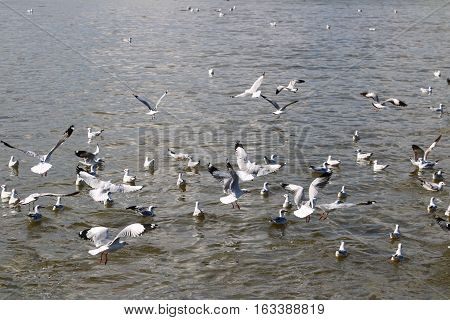 Among the birds waiting for food. Above the river.