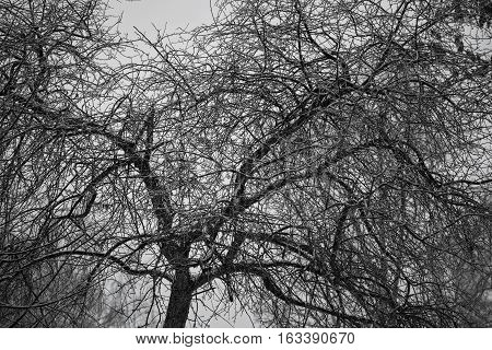 fantastic wood texture. Background of the branches of a bare tree. Gloomy mood pictures.
