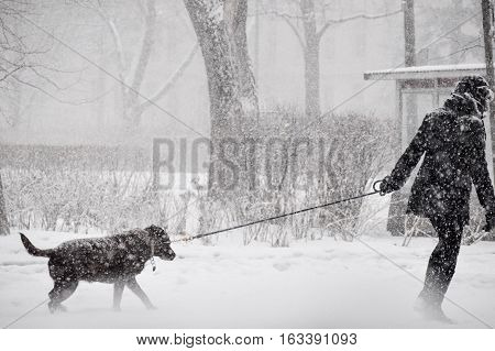 Person braving storm to walk dog across snowy Street during a snowstorm with falling snow and low visibility In a winter wonderland