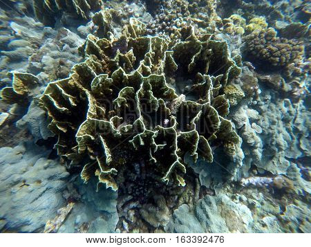 Underwater landscape with sophisticated hard corals. Small aquarium fishes. Seaside life scenery. Shapes of nature. Ocean ecosystem. Coral reef with animal. Tropical sea landscape. Seabed view