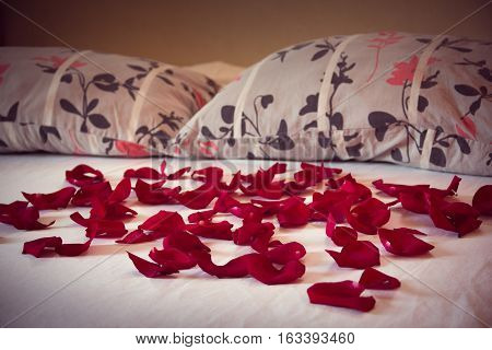 scattered petals from red roses on a bed with white sheet and two pillows