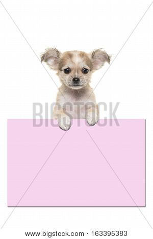 Cute chihuahua puppy dog holding a pink paper board with room for text on a white background