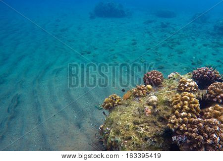 Underwater landscape with sand and coral reef. Blue clean water of tropical sea. Snorkeling photo. Sea bottom and sea life in Philippines. Tranquil natural background. Aquarium picture with text place