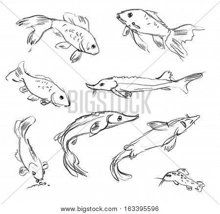 Aquarium fish. Set. Hand-drawn. Isolated on white background