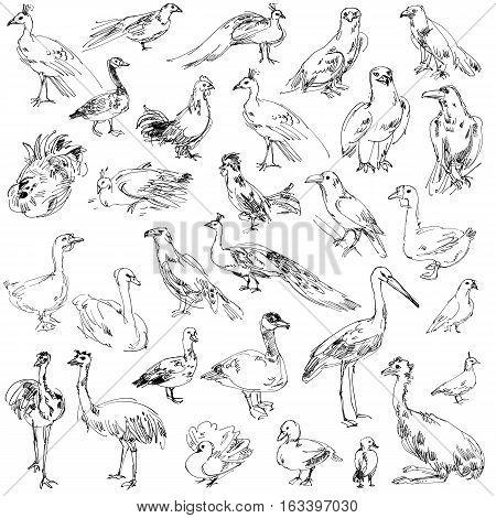 Wild birds. Set. Hand-drawn. Isolated on white background