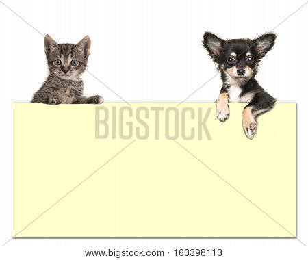 Cute chihuahua dog and a tabby baby cat holding an yellow paper board with room for text on a white background
