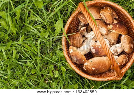 Fresh Forest Edible Mushrooms Boletus Edulis In Wicker Basket On Green Grass Outdoor. Top View And Copyspace.