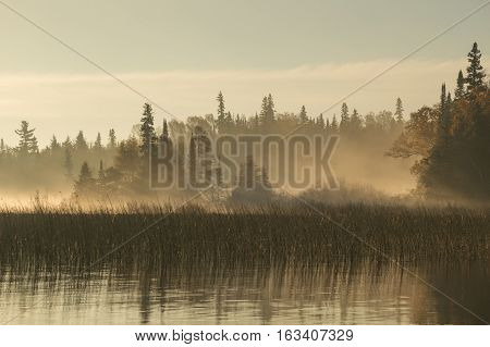 Taken at dawn this image whos shafts of sunlight shining through the fog between the camera and the conifer trees along the shoreline. The river has some reflections and reeds growing