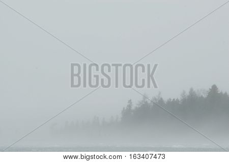 A grey and white background with almast all fog with a few faint tree silhouettes showing