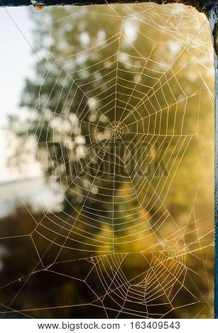 A beautiful Spider web in morning dew