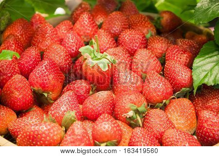 Background of freshly harvested strawberries, stock photo