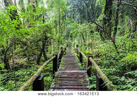 Beautiful rain forest at Angka nature trail in Doi Inthanon national park Thailand