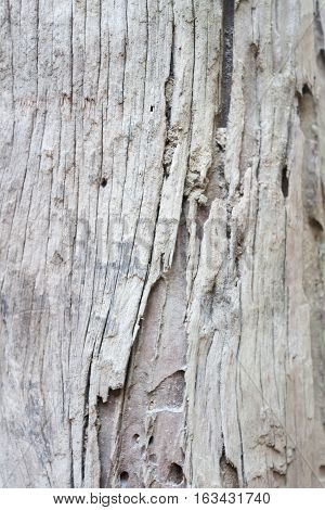Closeup of tree texture background, stock photo
