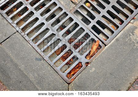 Fragment of street drainage. Metal sewer grate for the collection of water close-up with brown leaves.