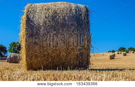 Hay bales on the field after harvest countryside of Puglia