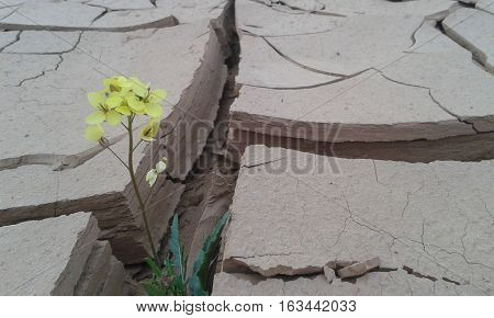 a beautiful yellow flower growth after death
