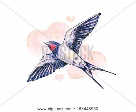 Beautiful swallow. Watercolor illustration. Spring bird brings love. Handwork