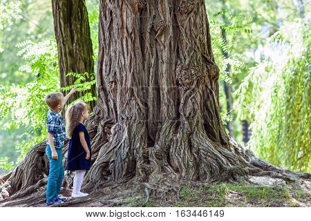Little boy and girl brother and sister standing beside a big stump of an old tree. Happy children playing in beautiful summer park on warm sunny day.