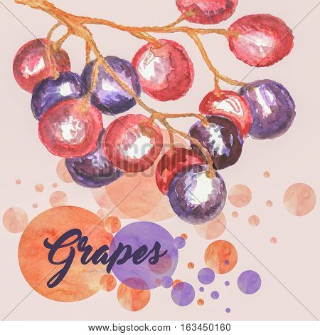 duo tone watercolor image of branch of grapes
